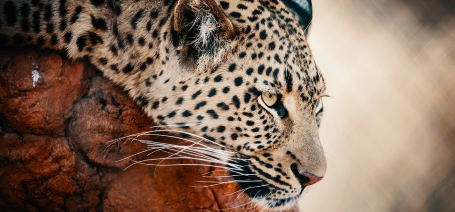 Nike, Facebook, and Now Jaguar: Big Corporations Turn to Crypto
