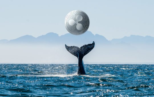 xrp ripple whale crypto