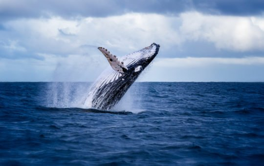 Whales Transfer Massive Amounts of Bitcoin as Bakkt Opens