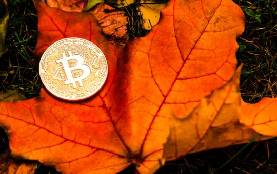 bitcoin thanksgiving