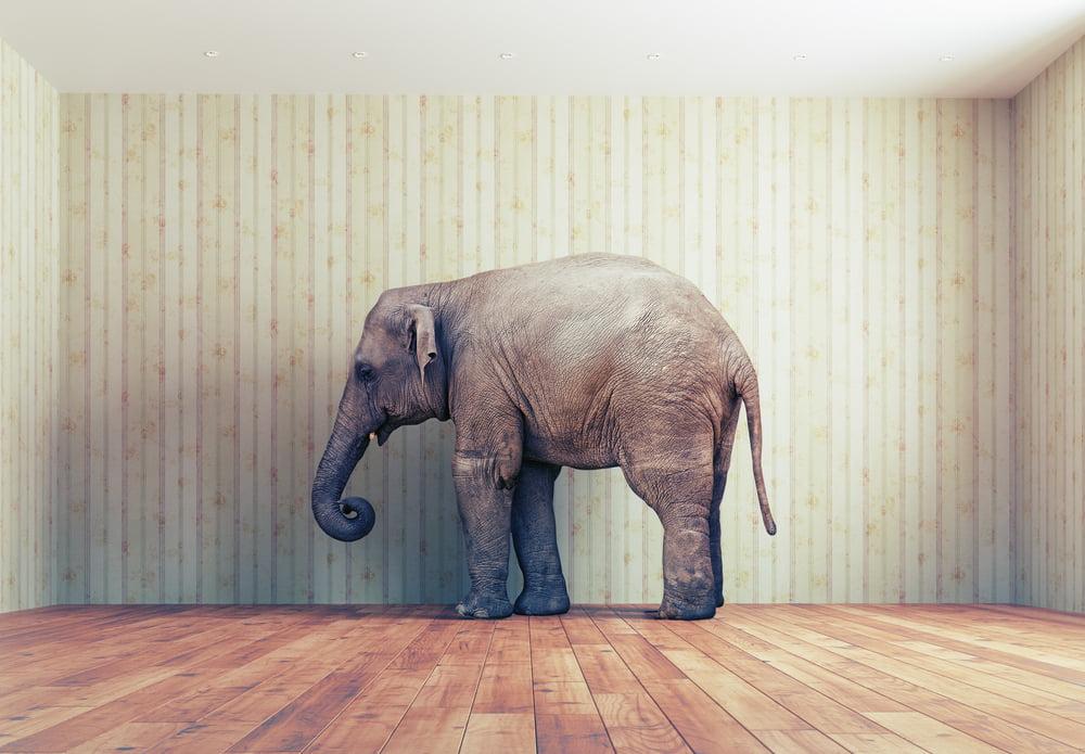 elephant bitcoin cash