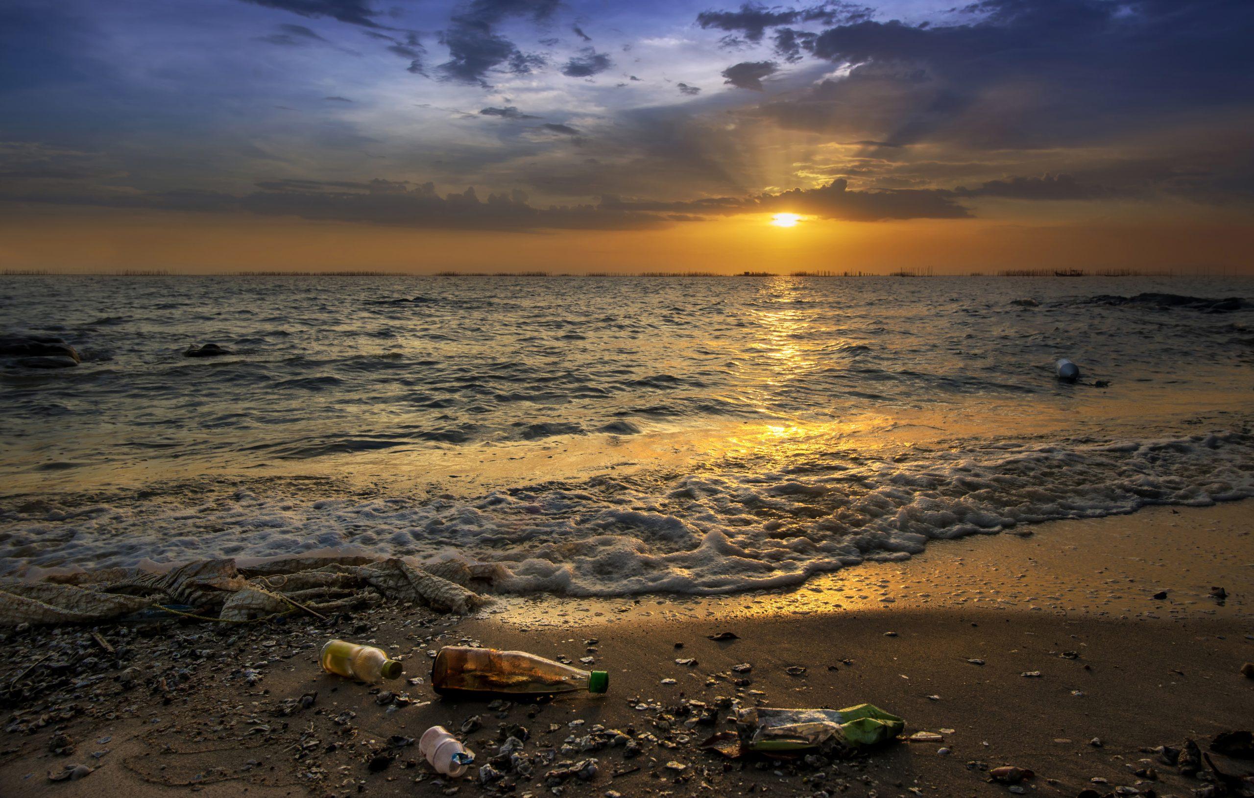 crypto defi trash beach altcoin major xrp ltc