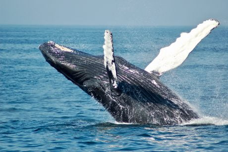 Bitcoin Whales Aren't Selling Their BTC; It May Be Boosting Its Price