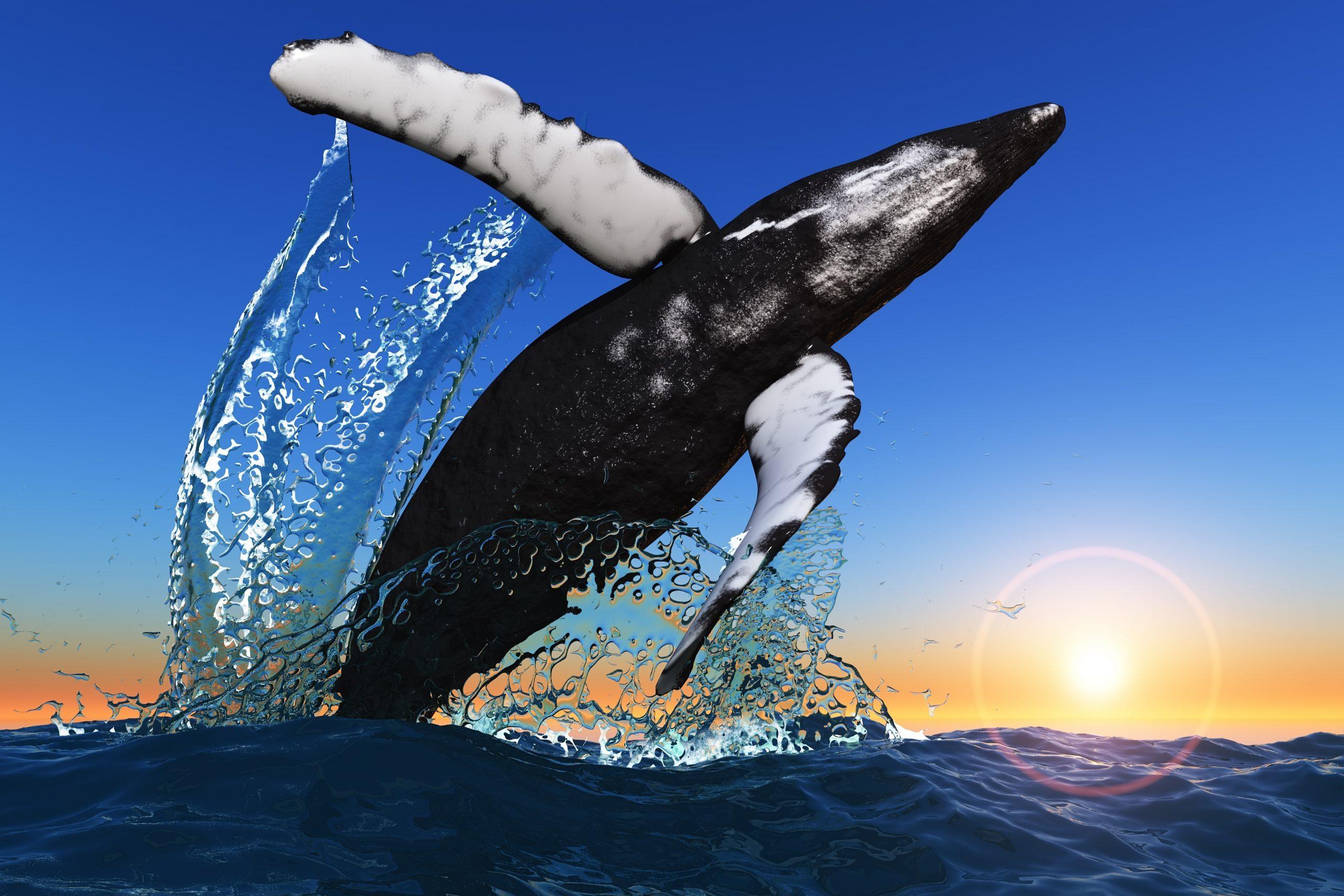 bitcoin btc whale wallet
