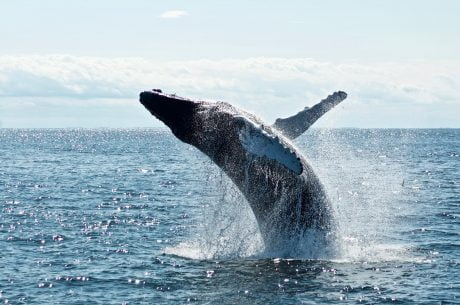 Despite 50% Drop From $20 Highs, Chainlink Whales Remain Bullish