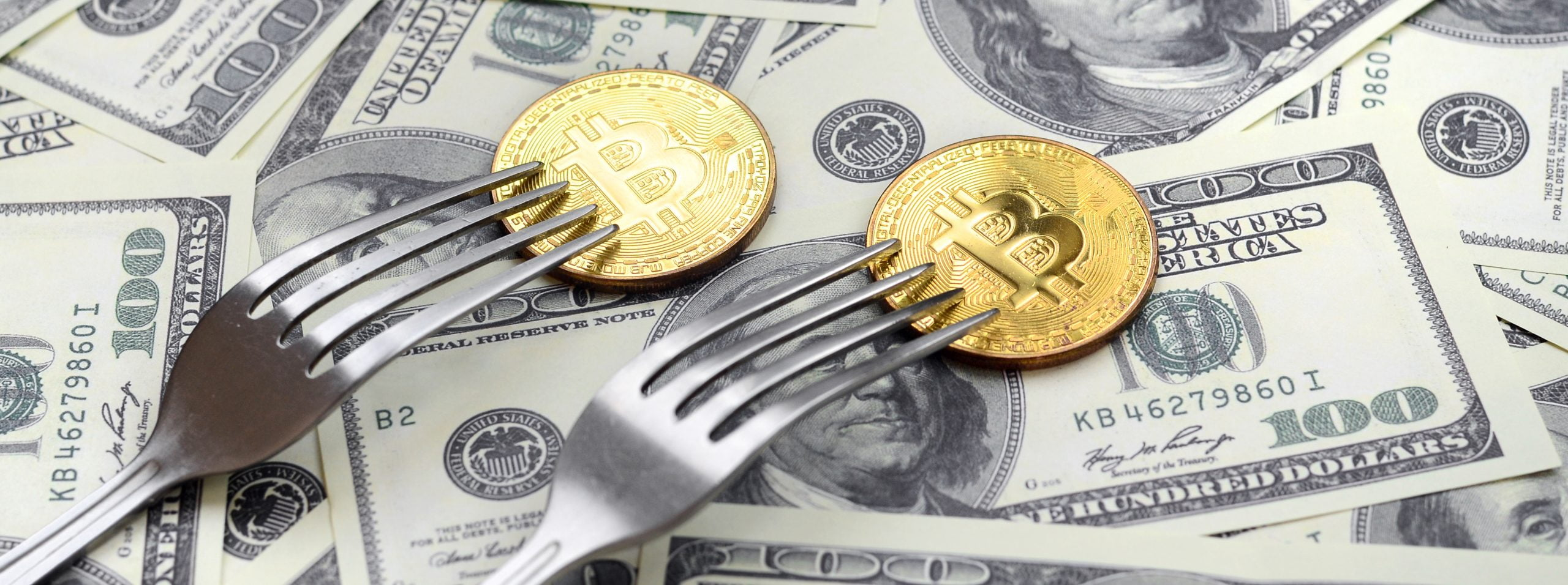 Kim Dotcom Claims This <bold>Fork</bold> Is More Undervalued Than <bold>Bitcoin</bold>, Here's Why