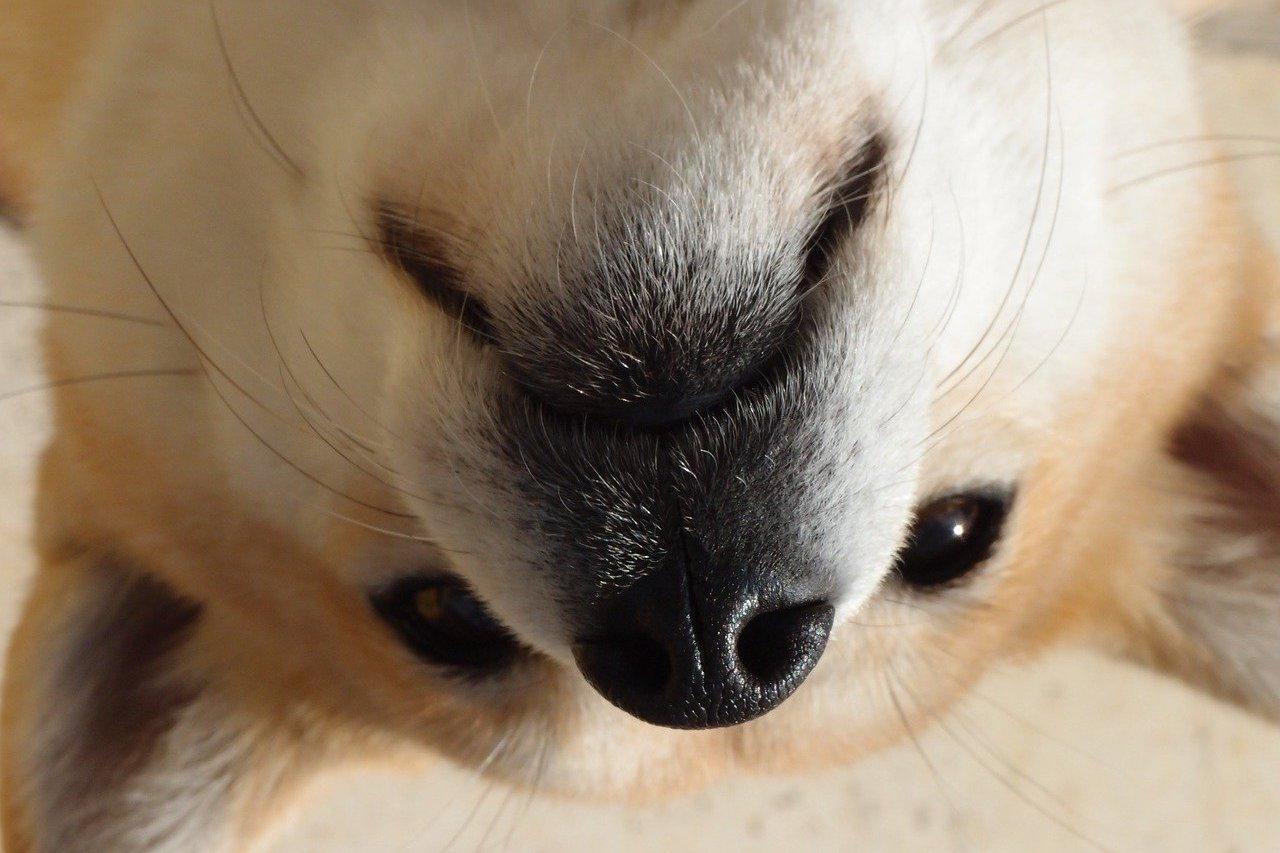 dogecoin dog-1203351_1280