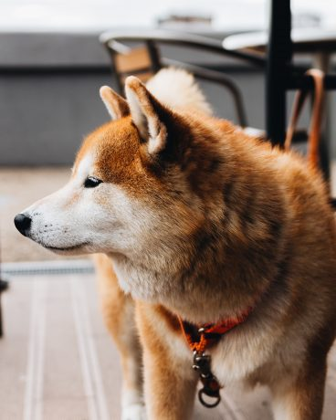Dogecoin Holds Strong Against Weekend Flash Crash, What is Happening?