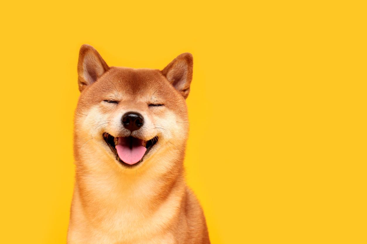 Dogecoin: A Brief History Of Crypto's Greatest Meme