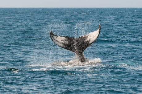 12K BTC Removed From Coinbase, Are Whales Relenting?