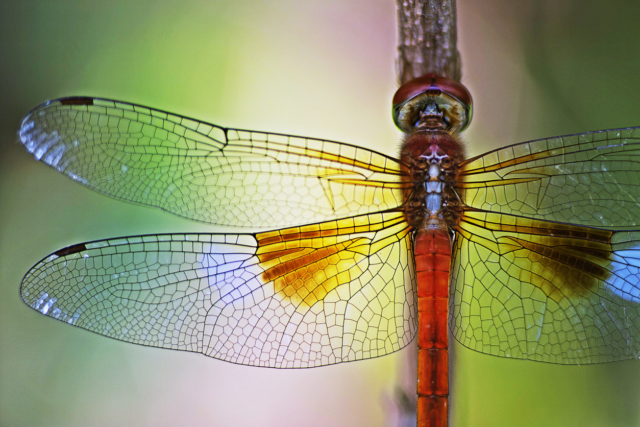 bitcoin dragonfly doji