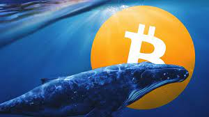 """Bitcoin Whale Warns Of """"November 2018 Vibes."""" What This Means"""