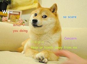 Dogecoin: краткая история величайшего мема криптографии