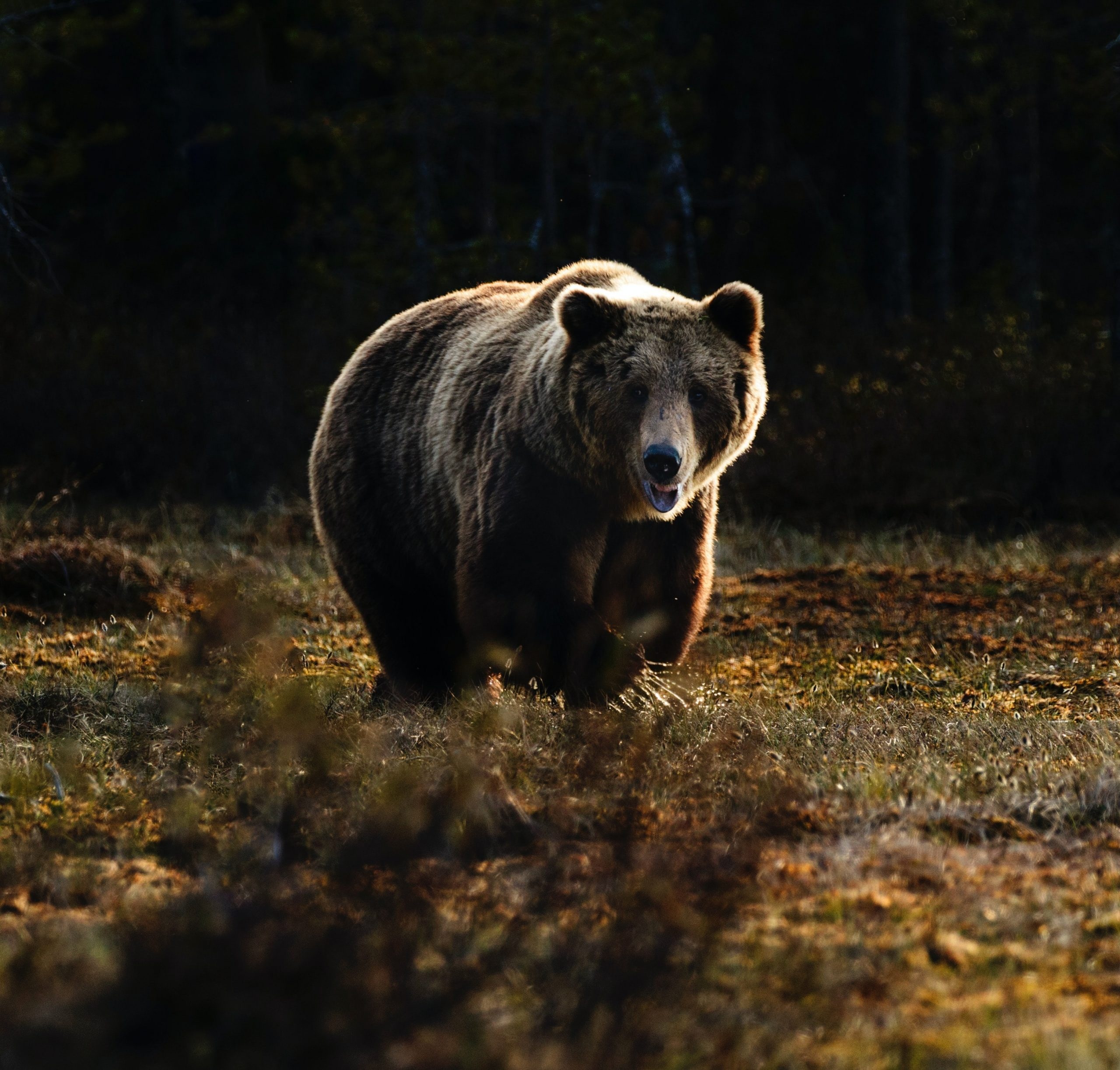 Bitcoin Bear