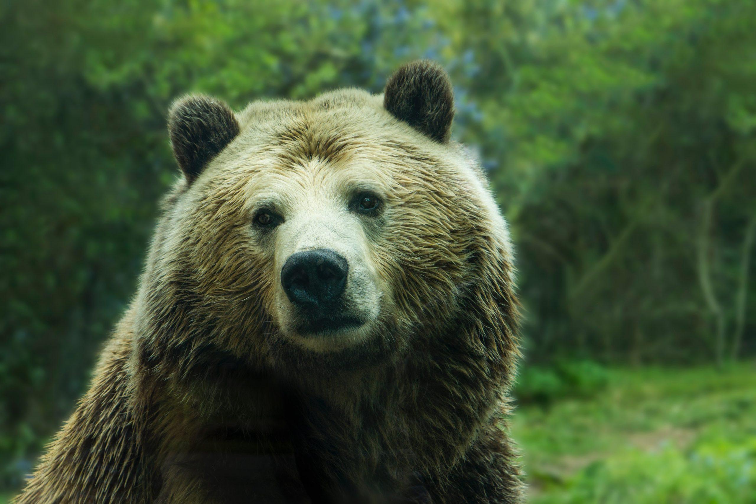 Ethereum Bear