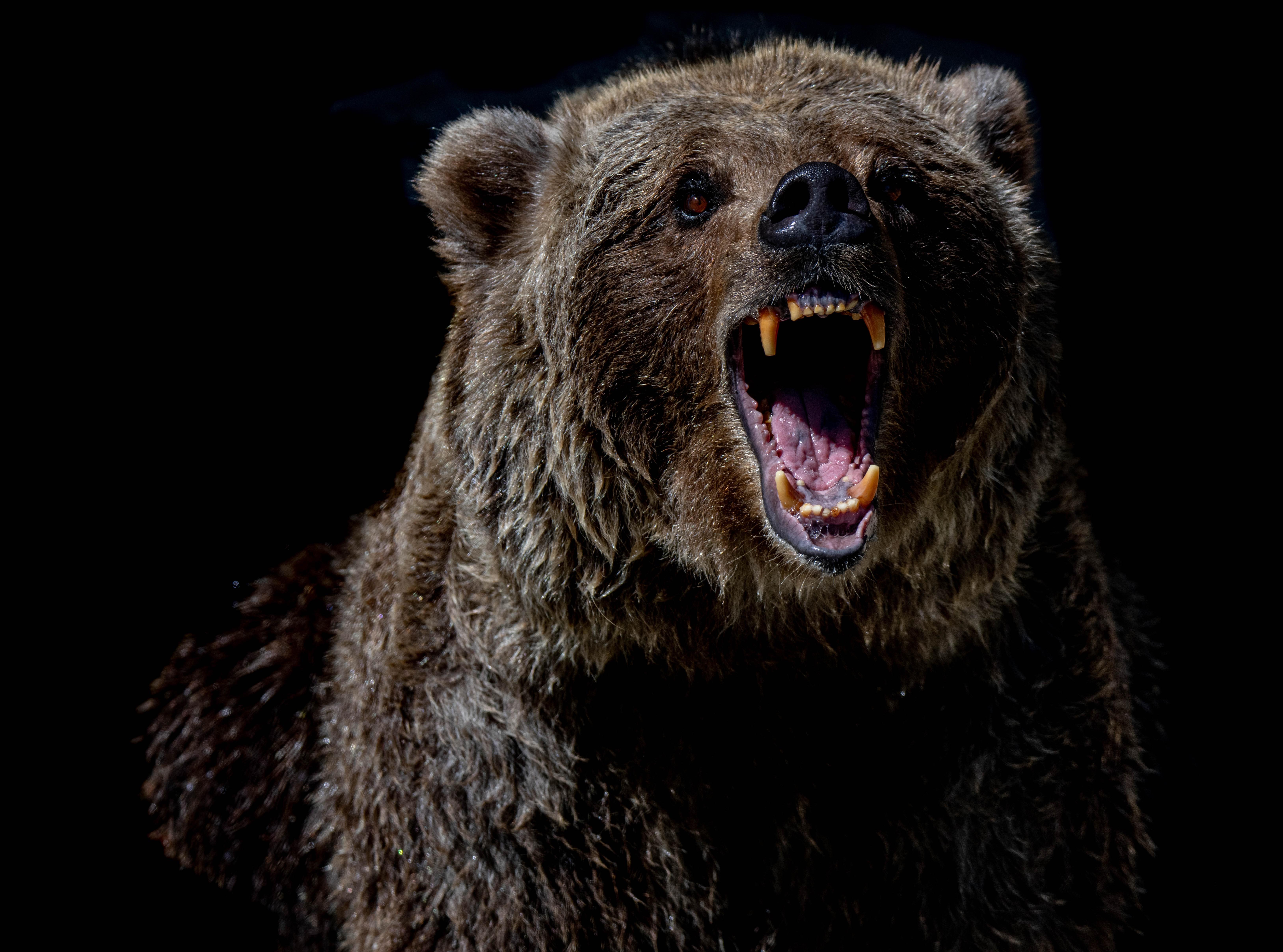 Bitcoin Bearish Signals Go Off Despite Recovery Above $44k, Dead Cat's Bounce?