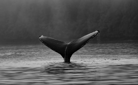 On-Chain Data Shows Bitcoin Whales Hold Fort Despite Recent Dips