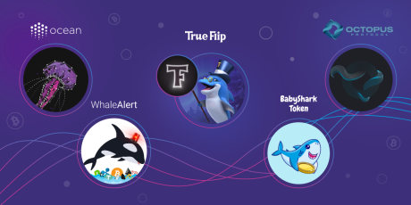 Shrimps, Sharks, Whales and Other Fish in Crypto
