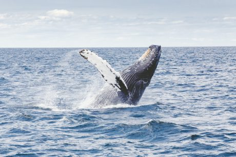 Bitcoin Bullish Signal: Whales Are Building Their Positions On Derivatives